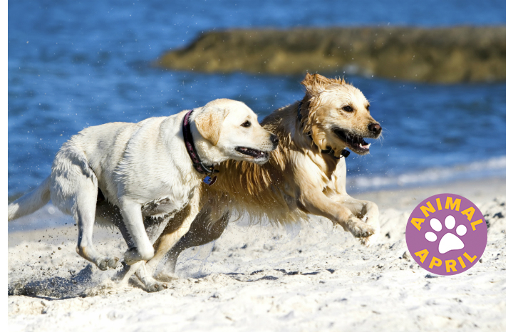 2%20Blond%20Dogs%20running%20across%20beach%20HR-1.jpg