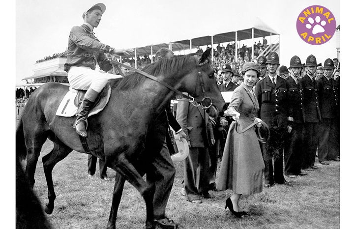 queen-elizabeth-horse-racing.jpg