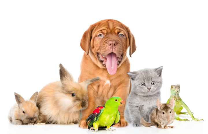 pets%20dogs%20cats%20rabbits%20parrots.jpg
