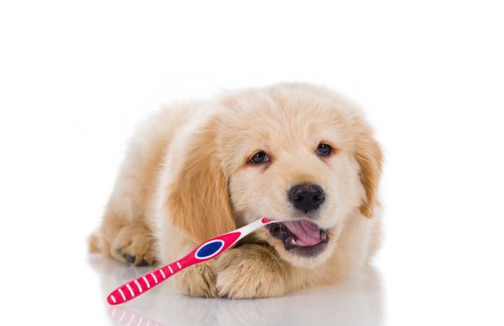 dog-teeth-cleaning-vet.jpg