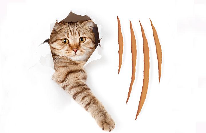 cat-scratching.jpg