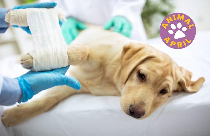 vets-bill-insurance-pet-dogs-cats.jpg