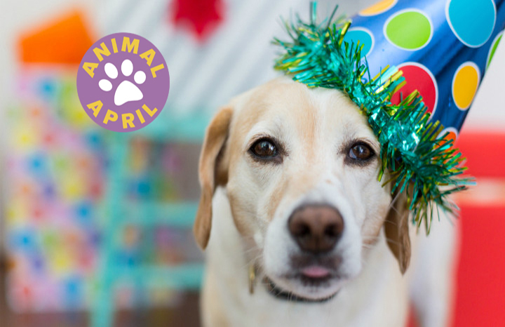 Do You Celebrate Your Pets Birthday