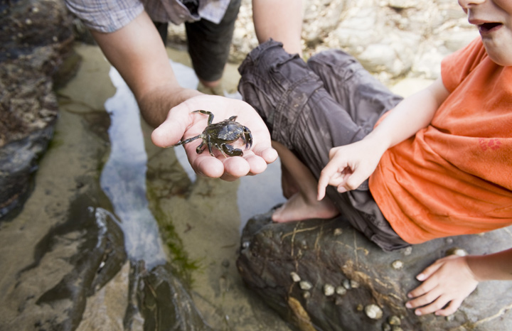 Creatures-in-a-rockpool%C2%A9National-Trust-ImagesJohn-Millar.jpg