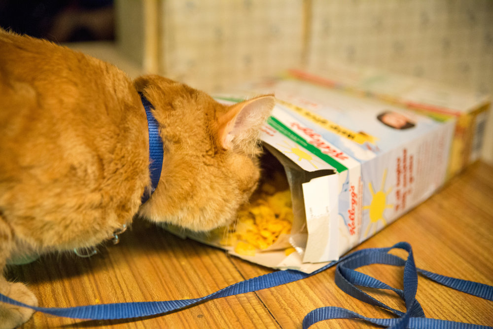 'Ooh what's in here? Please tell me it's more Dreamies!'