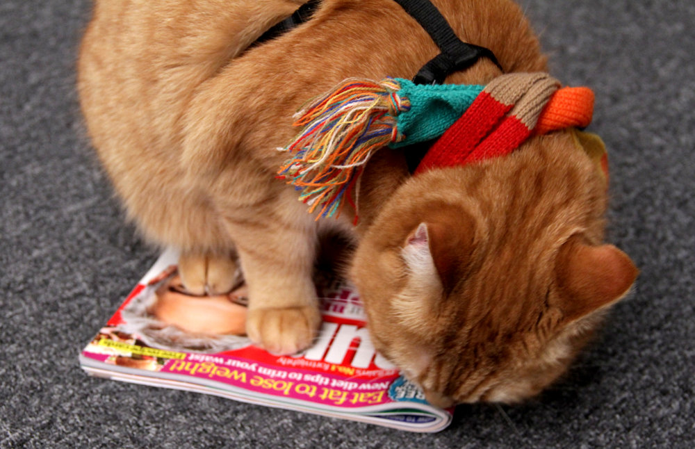 Bob sniffs out Yours magazine – and we're pleased to report he thinks it's the cat's pyjamas
