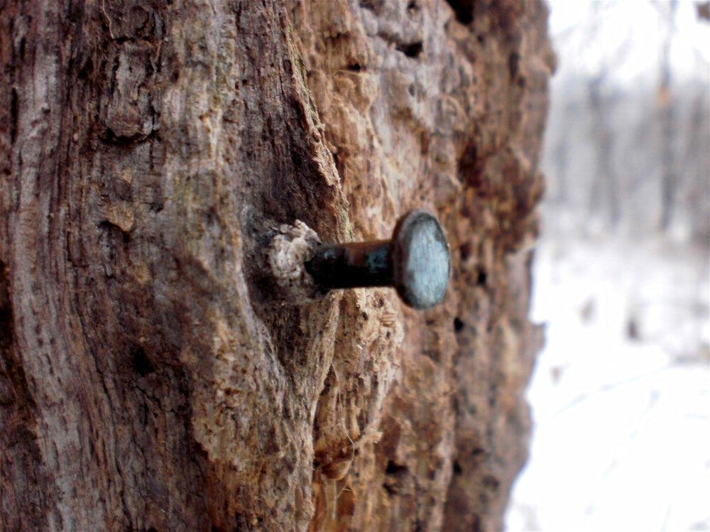 nail_tree