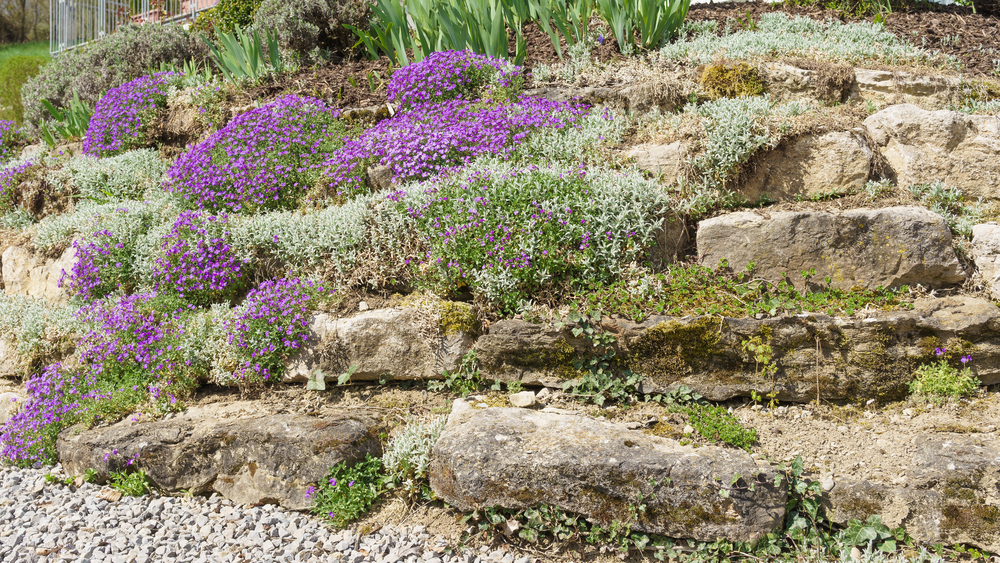 rockery-garden