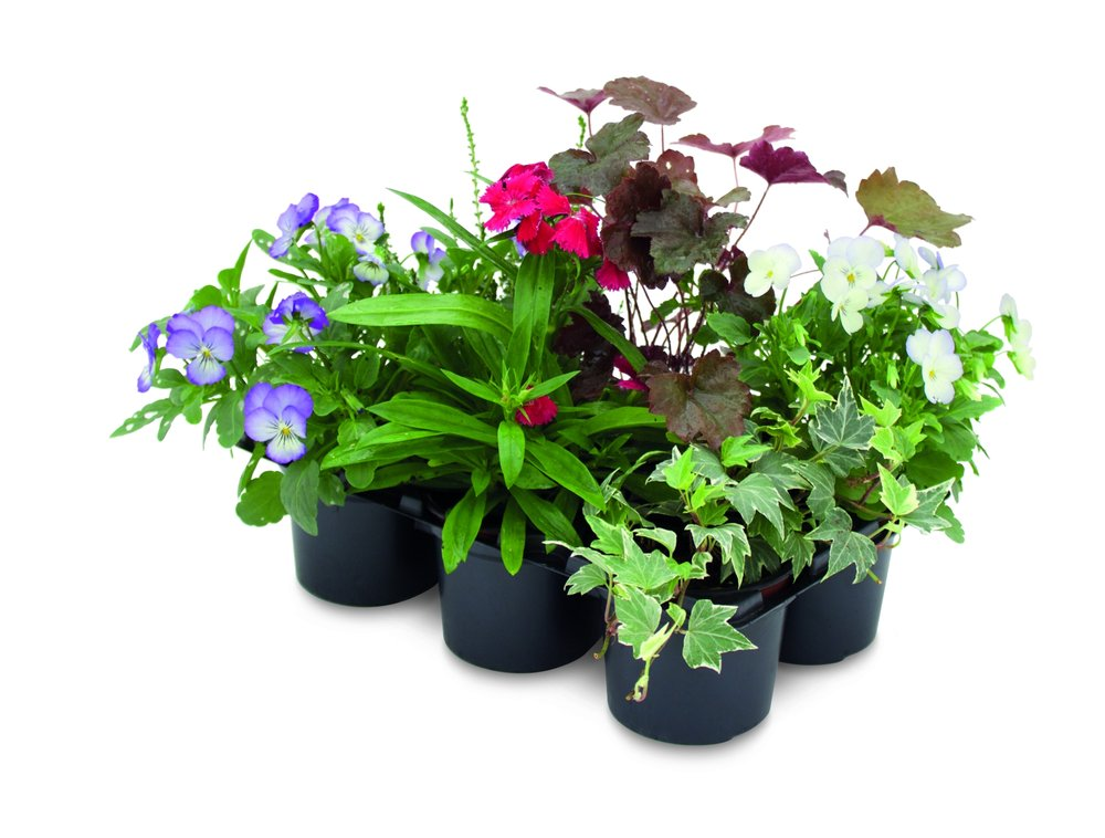 Autumn_hanging_baskets_Aldi