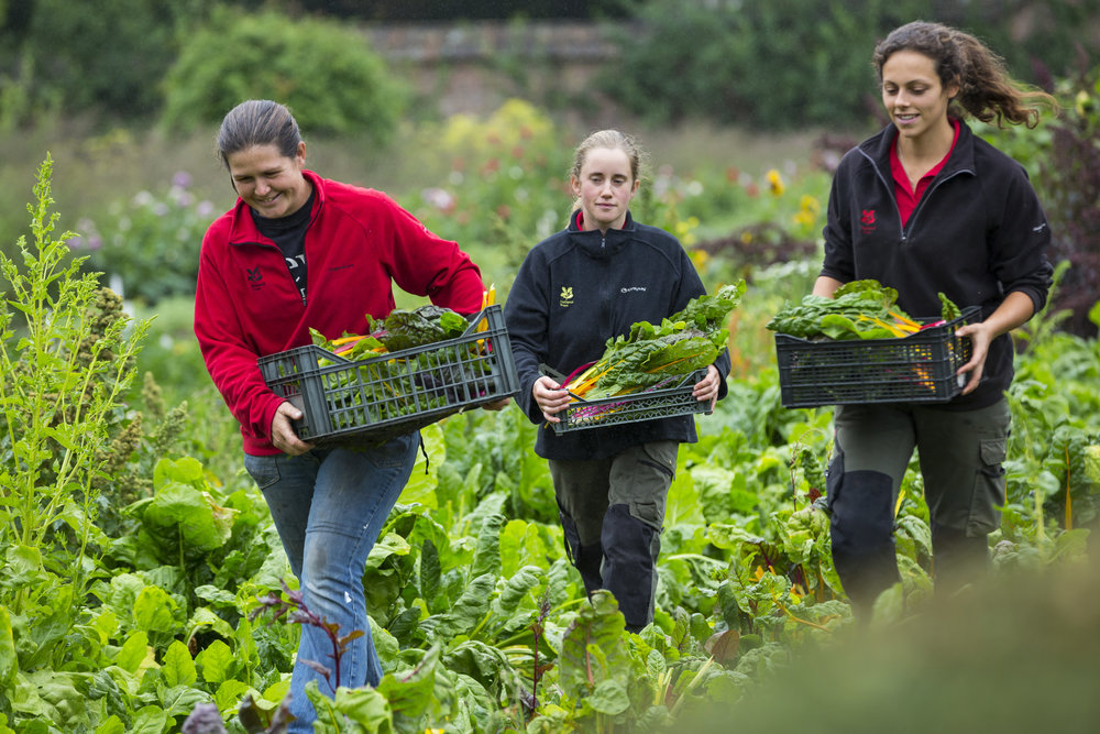 Harvesting National Trust Images Chris Lacey.jpg
