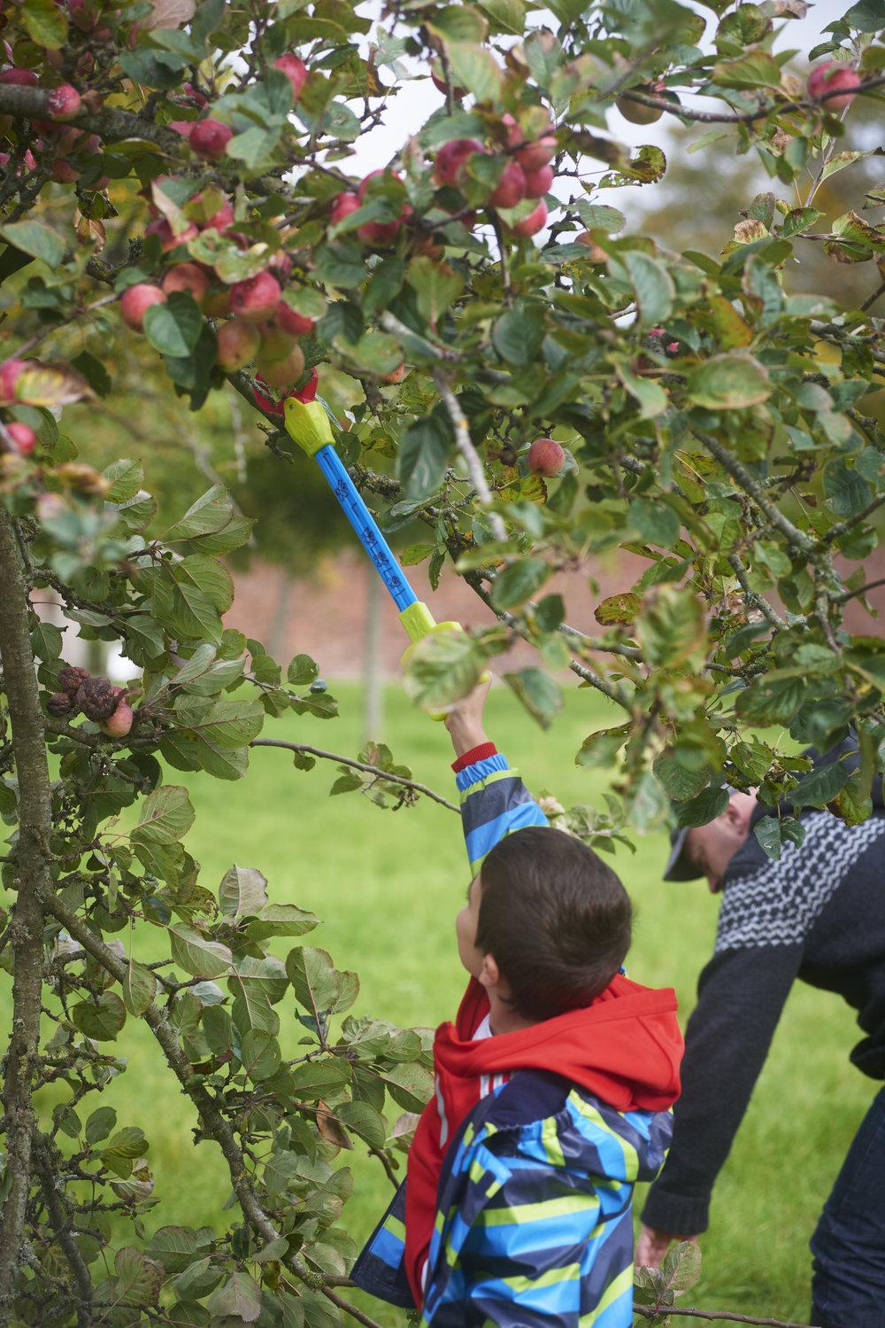 Apple days National Trust Images William Shaw.jpg