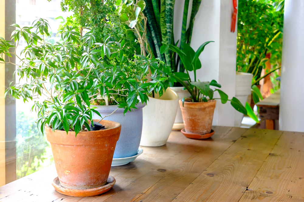 houseplants-purify-air.jpg