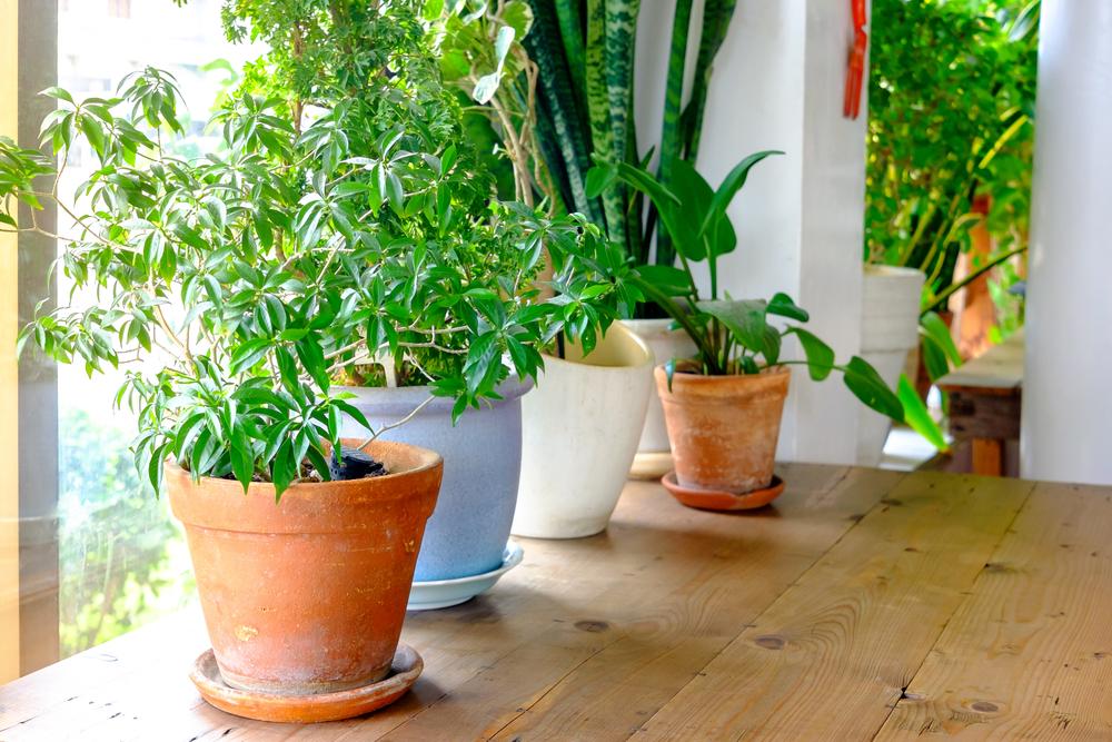 houseplants-purify-air.jpg