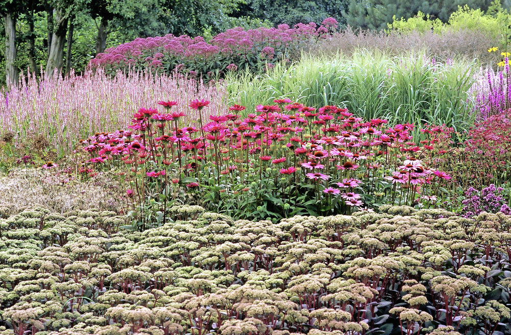 Pensthorpe Millennium Garden in autumn with Echinacea, grasses, Sedum eupatorium and lythrum