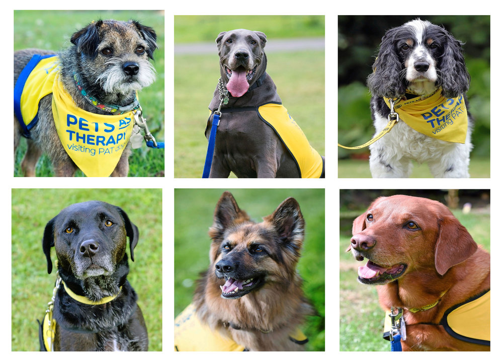 Vote for your Pets as Therapy Dog of the Year!