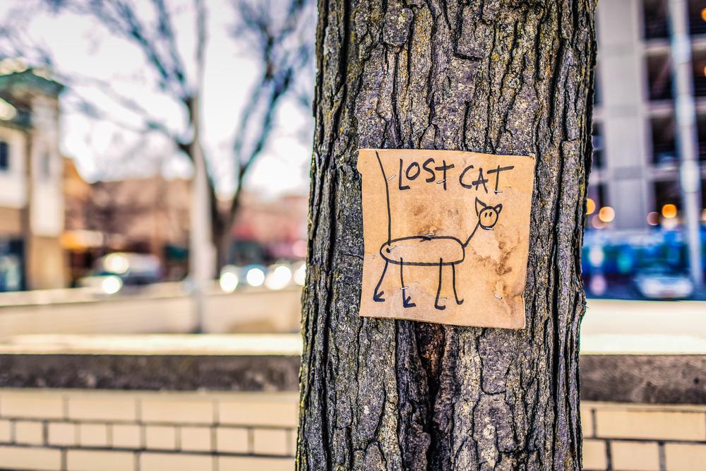 lost-cat-poster.jpg
