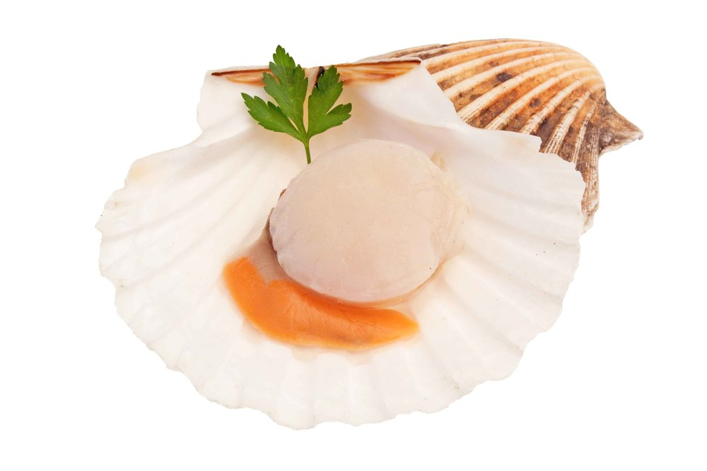 isle-of-man-queen-scallop.jpg