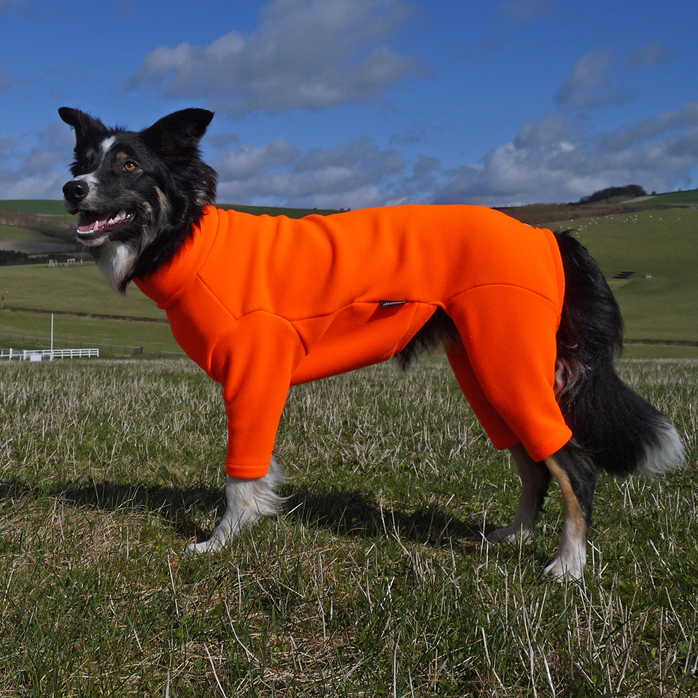 dog-suit-10 (1).jpg