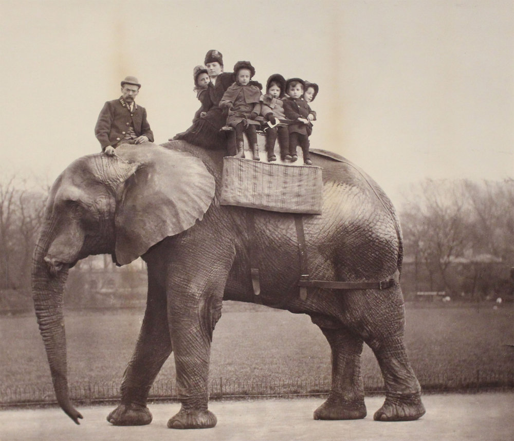 jumbo-elephant-dumbo-attenborough.jpg