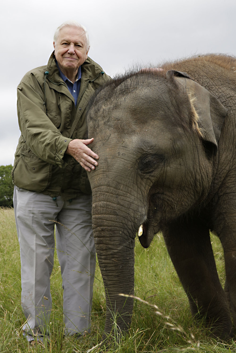david-attenborough-elephant.jpg