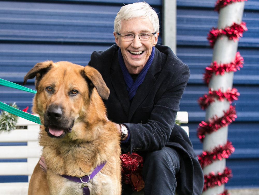 ITV PAUL_OGRADY_LOVE_OF_DOGS_CHRISTMAS_01.jpg