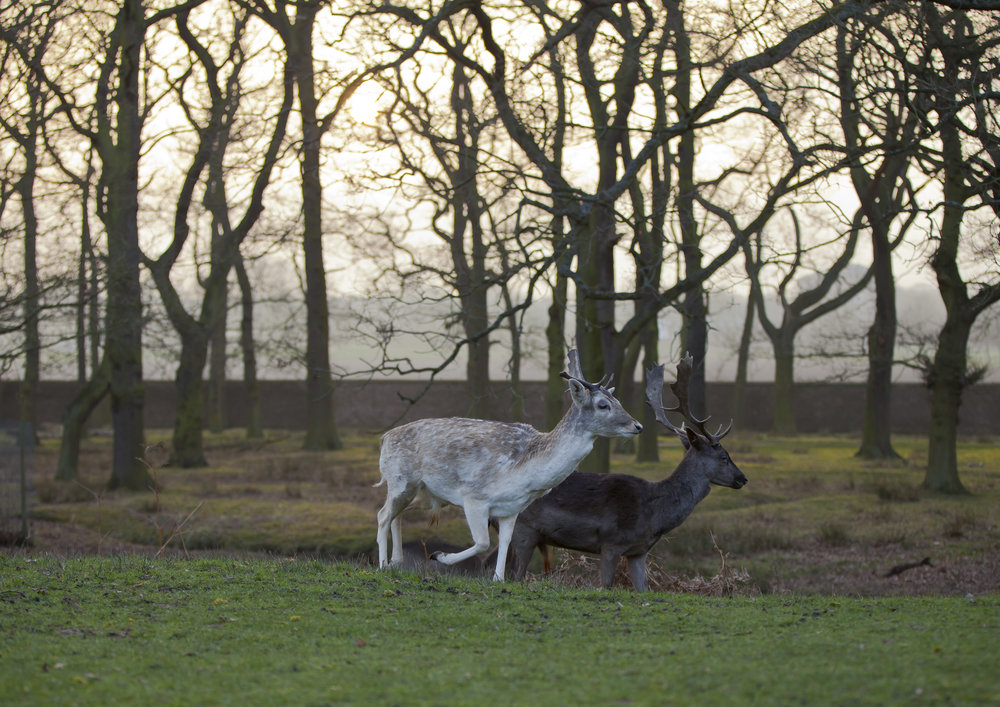 Dunham Massey National Trust Images Chris Lacey 948433.jpg