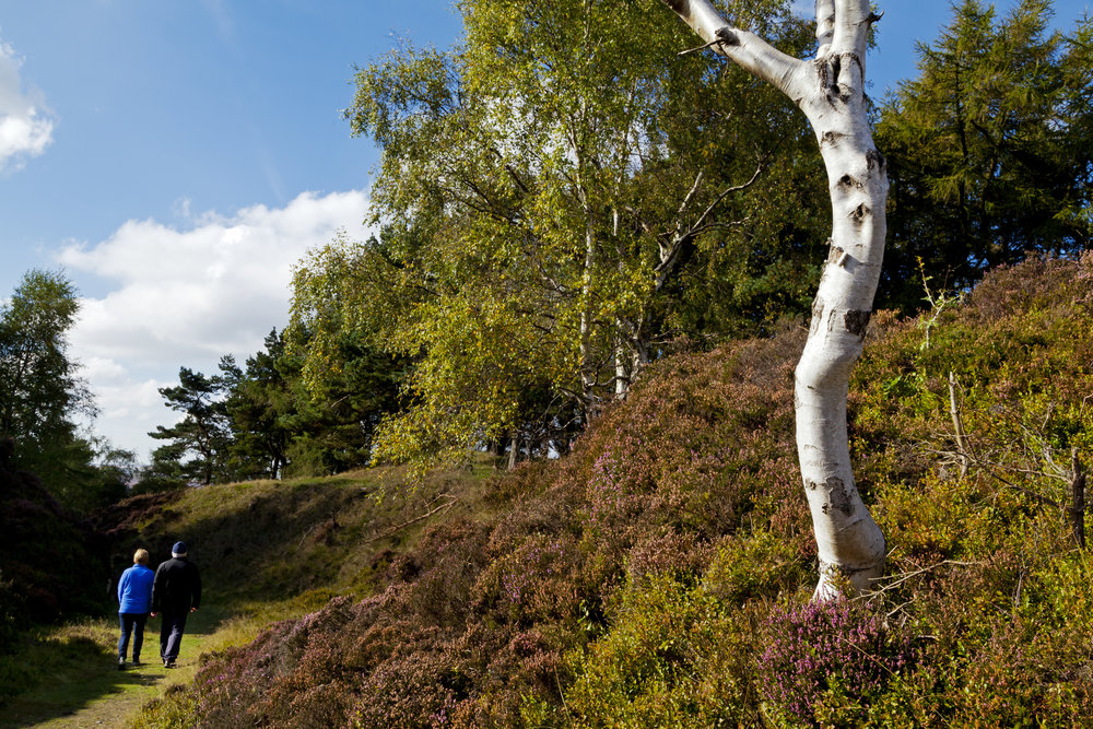 Longshaw National Trust Images Robert Morris 1180992.jpg