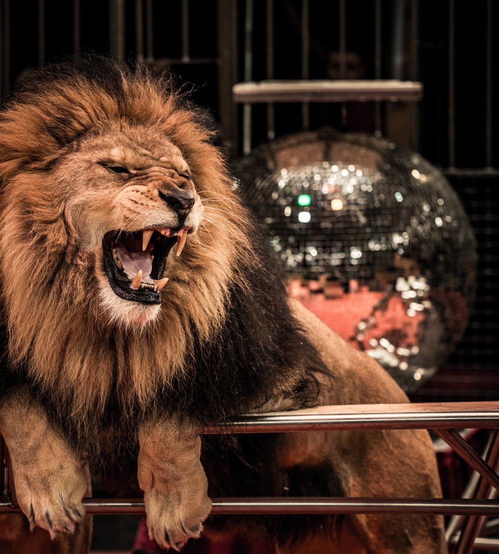 circus-lion.jpg