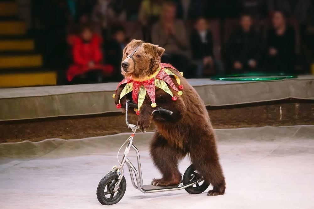 circus-bear.jpg