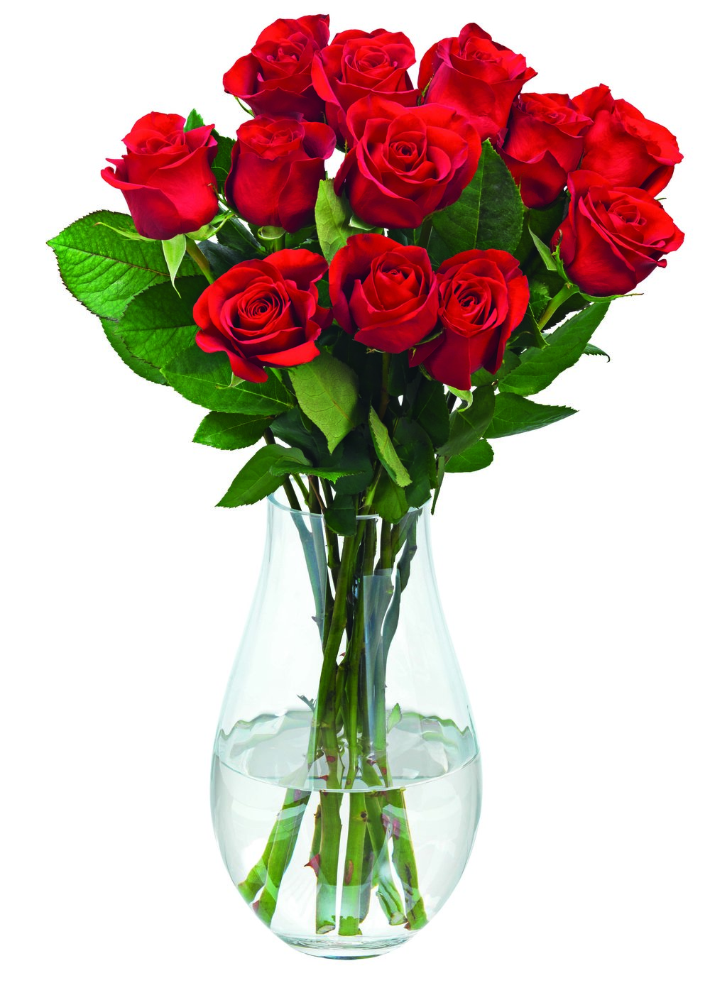 Tesco's dozen roses for £18