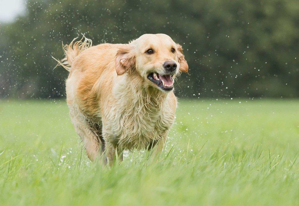 dog-in-rain.jpg
