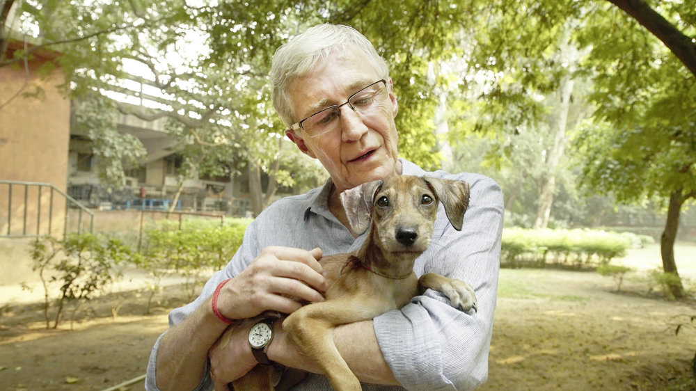 for-the-love-of-dogs-india.jpg