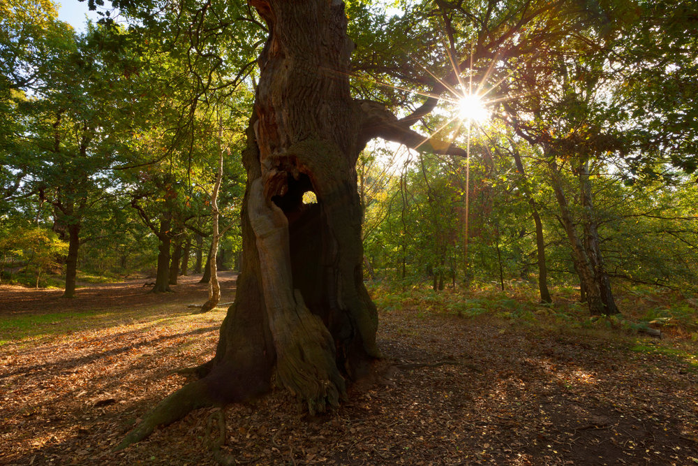Celebrate our great English woodland in a place that's full of incredible, historic trees