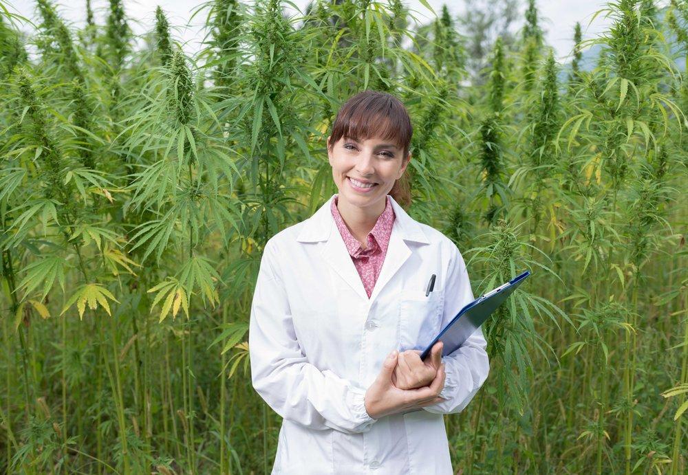 cannabisfarm.jpg
