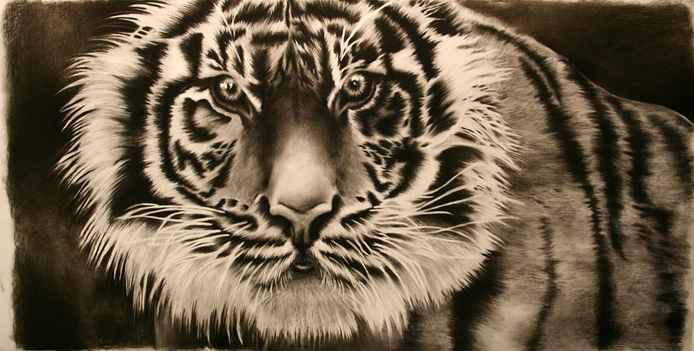 "Drawing II  40x80""  Charcoal"