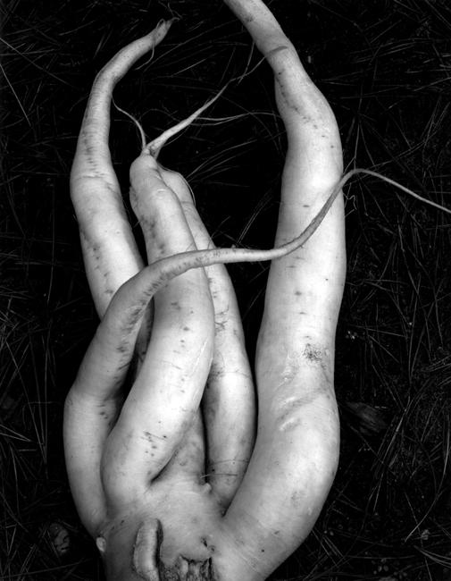 58V Radish by Edward Weston