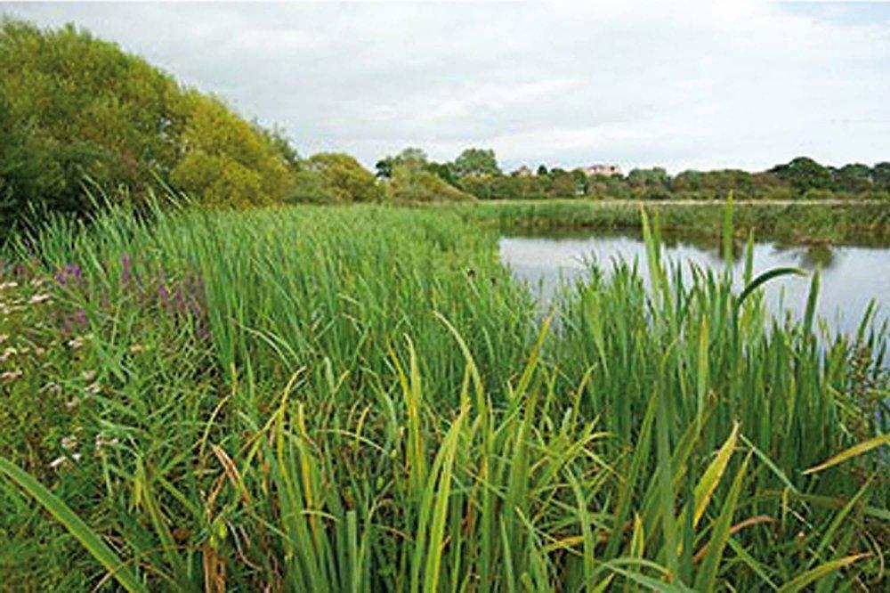 Photo 7 (Reed Bed).jpg