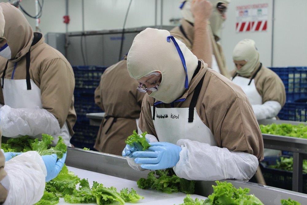 Vegetales Fresquita McDonald's 1.jpg
