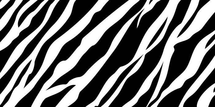 zebra-print-twitter-header-cartoon.jpg