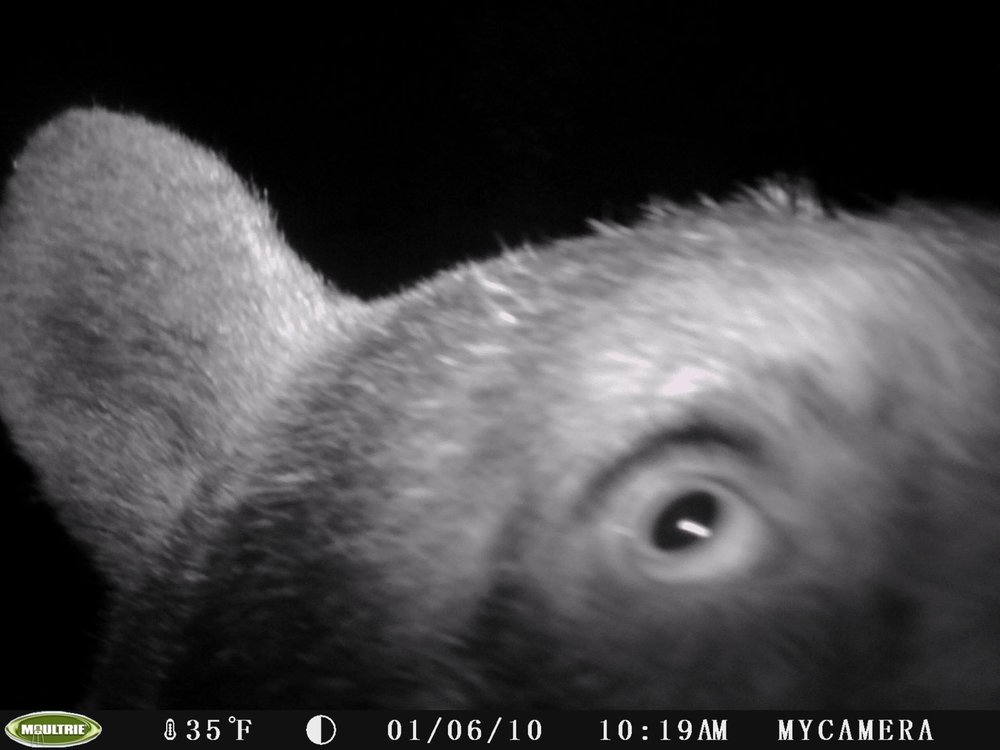 Motion-activated trail cameras give a glimpse