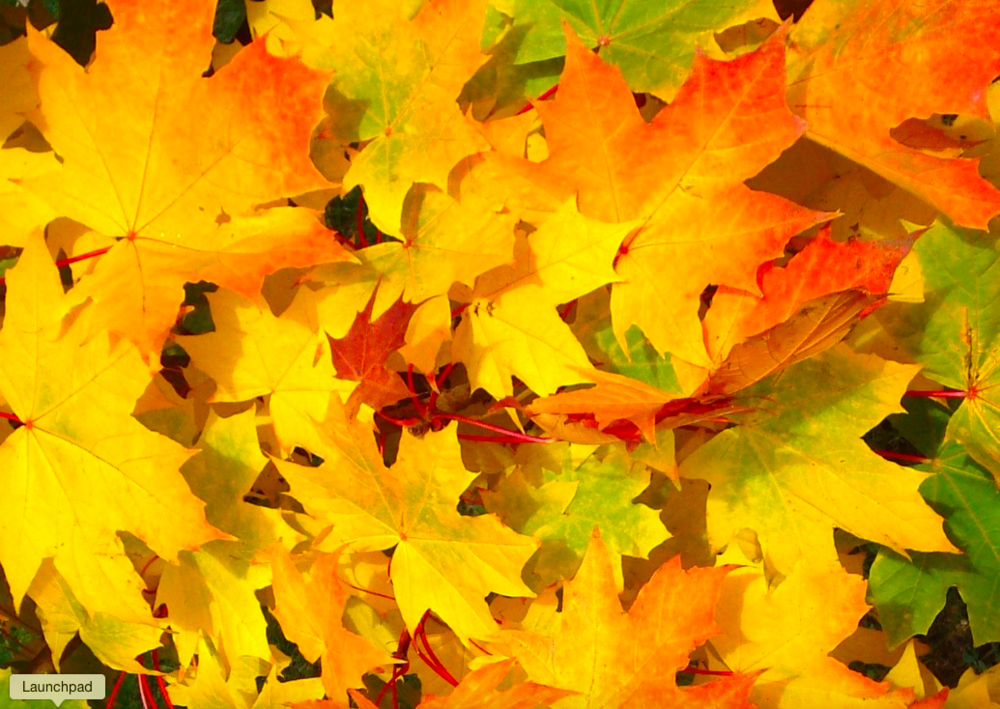 FALL LEAVES WEB.png