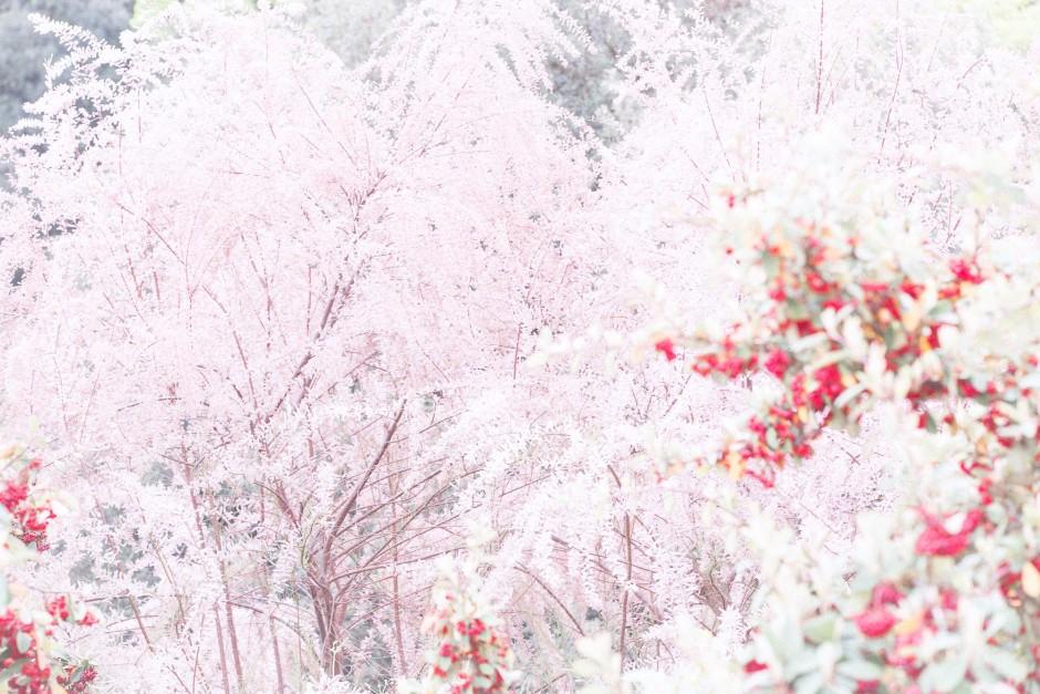 Pink_kor30_b90_corrMP1-940x627.jpg