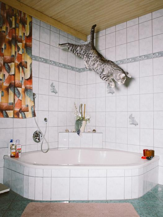 04_catcal_Gebhart_de_Koekkoek.jpg