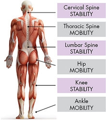 stability-mobility cont..jpg