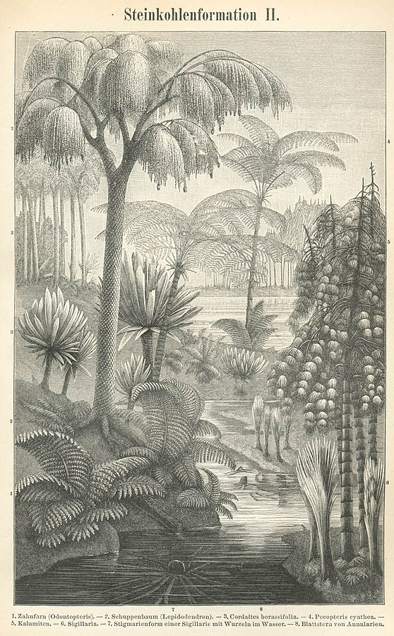 19th century sketch of carboniferous plants. Source: Wikipedia.