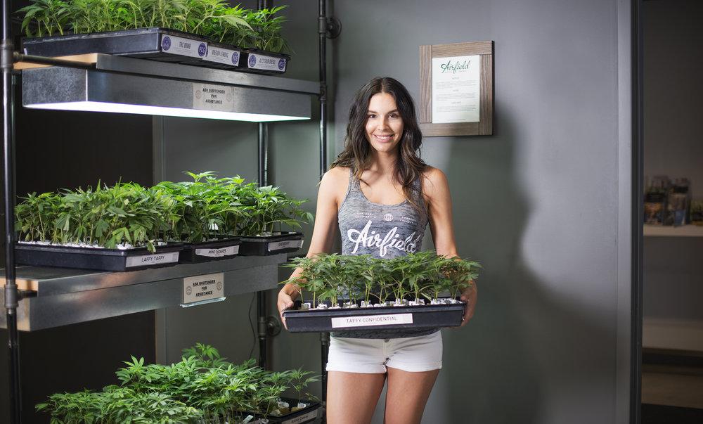 Marijuana Clones