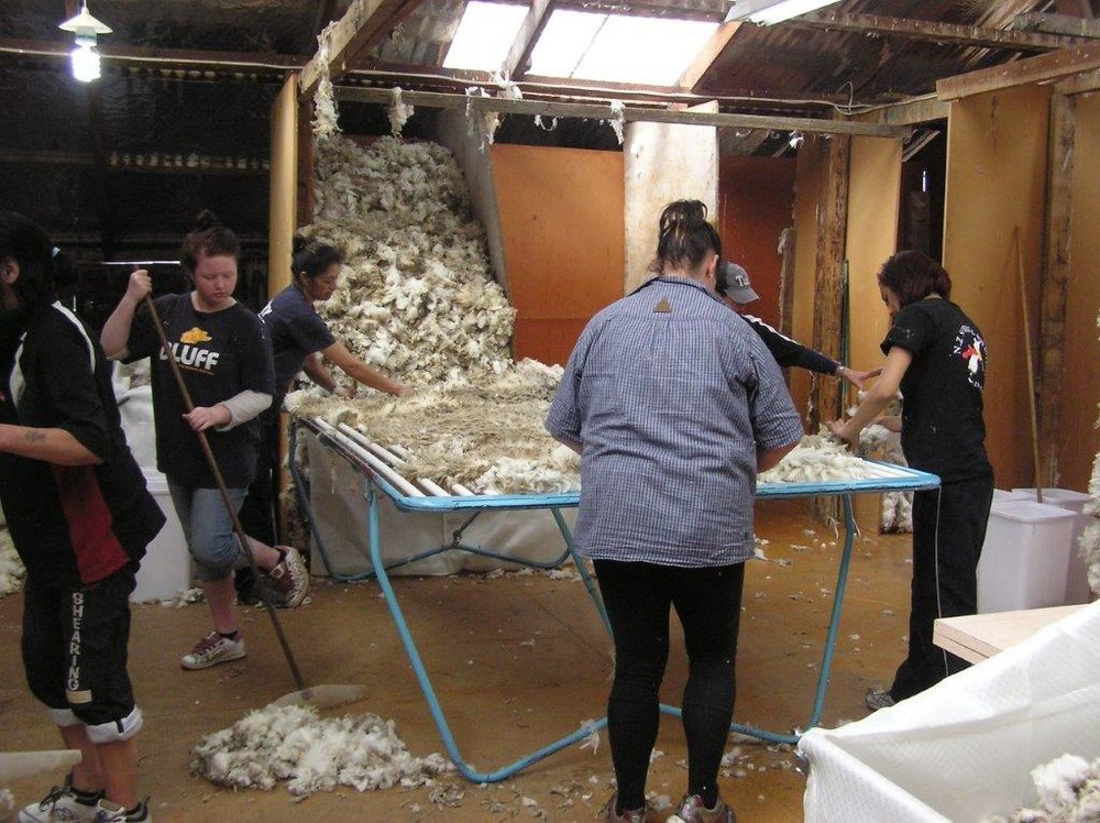 J. 16th october 2011 Shearing Ben Avon (37).jpg