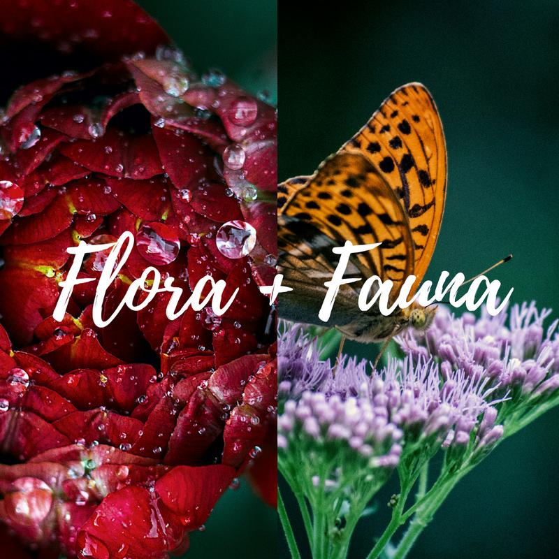 FLORA+FAUNA.png