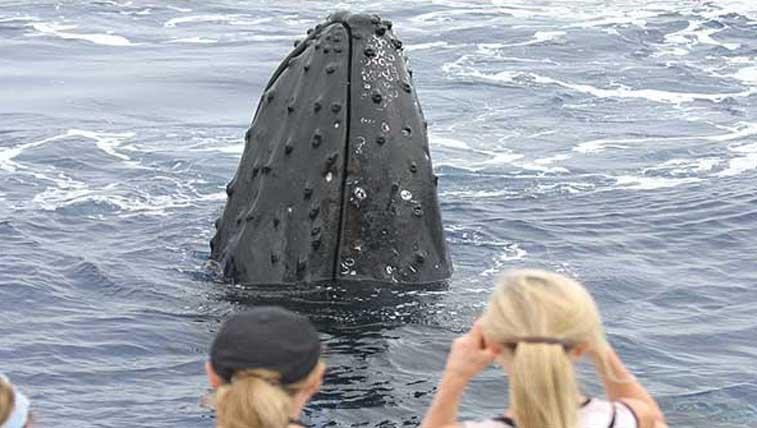 Ocean_Project_Whale_3.jpg