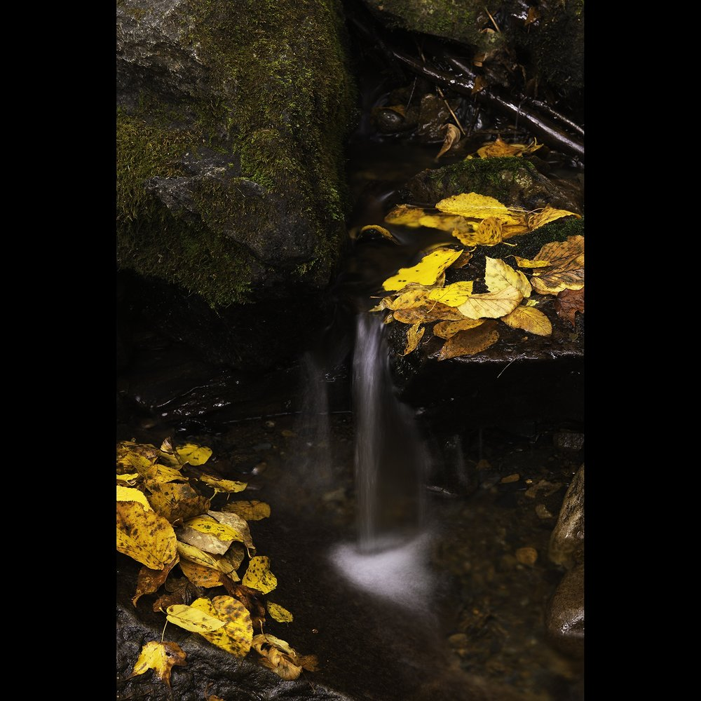 NicholasNott | Photography/Digital Photography